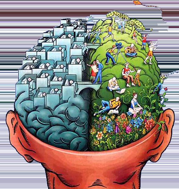 Zone del cervello